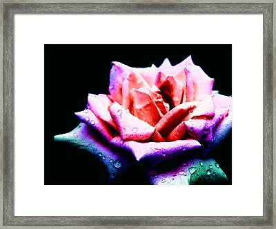 Framed Print featuring the photograph Rachel's Rose by Rachel Mirror