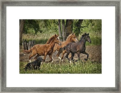 Racing The Dog Framed Print by Priscilla Burgers
