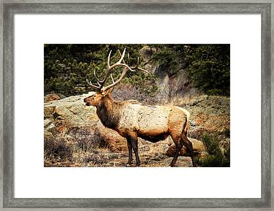 Rack Of Elk Framed Print