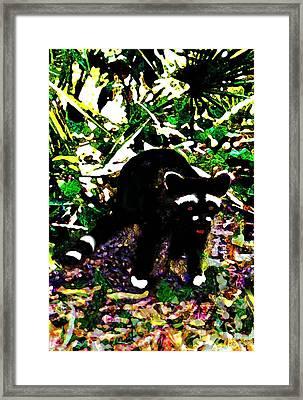 Racoon At Faver-dykes Park Framed Print by Dane Ann Smith Johnsen