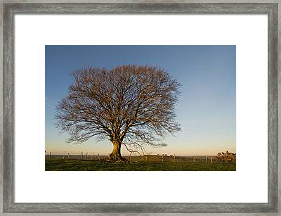 Raddon Hill Top Tree Framed Print by Pete Hemington