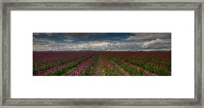 Radial Colors Framed Print