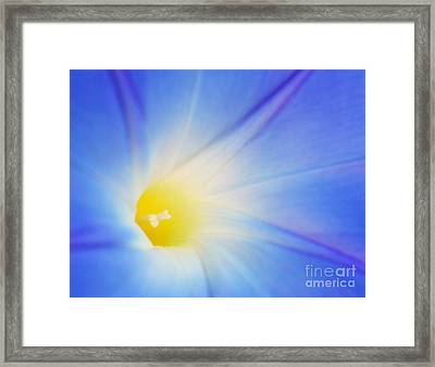 Radiance Framed Print by Raena Wilson