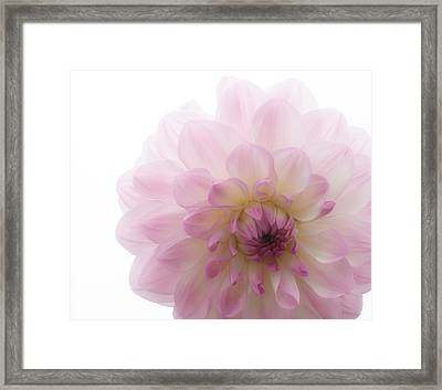 Radiant Bloom Framed Print