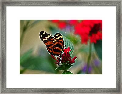 Radiant Butterfly Framed Print
