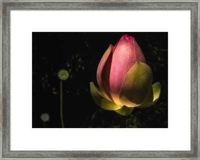 Radiant Life Framed Print
