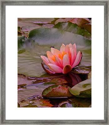 Radiant Lily Framed Print