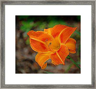 Framed Print featuring the photograph Radiant Orange by Linda Brown