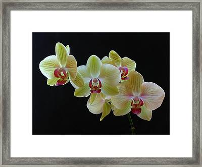 Radiant Orchid Framed Print by Juergen Roth
