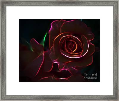 Radiant Rose  Framed Print