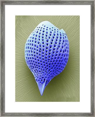Radiolarian Framed Print