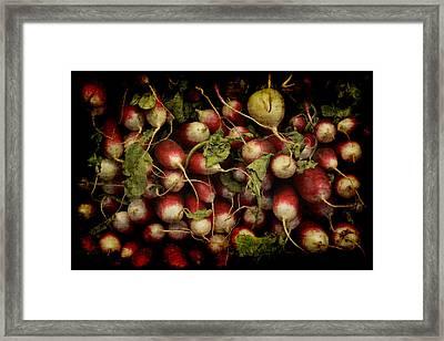 Flemish Radish Art Framed Print