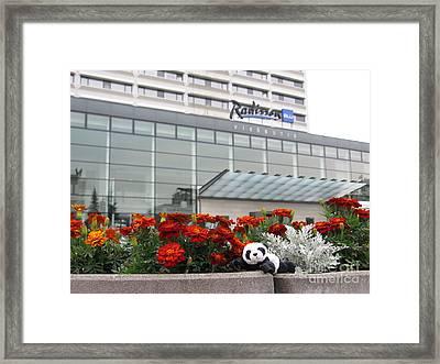 Radisson Blu Lietuva. Baby Panda Likes It Framed Print by Ausra Huntington nee Paulauskaite