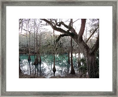 Radium Springs Creek Framed Print by Kim Pate