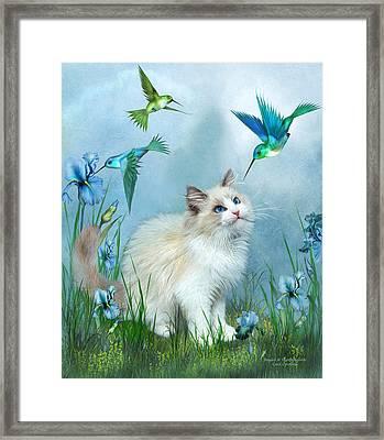Ragdoll Kitty And Hummingbirds Framed Print by Carol Cavalaris