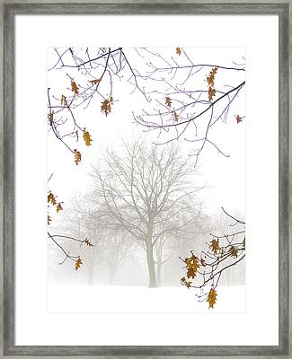 Framed Print featuring the photograph Ragged Glory by Russell Styles