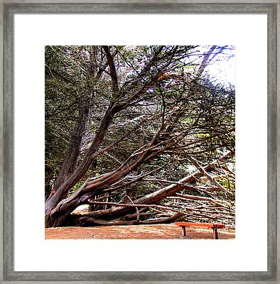 Ragged Point Tree Framed Print by Stephanie Moses