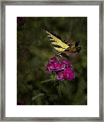 Framed Print featuring the photograph Ragged Wings by Belinda Greb