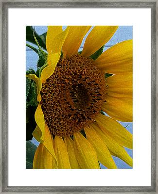 Rahab's Sunflower Framed Print