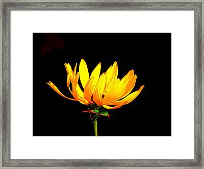 Railroad Daisey And Grasshopper Framed Print by Phyllis Beiser