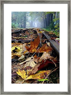 Rails And Leaves Framed Print