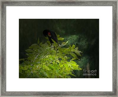Rain And The Red Wing Blackbird Framed Print by Michelle Frizzell-Thompson