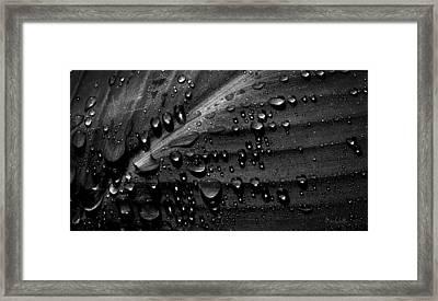 Rain Framed Print by Bob Orsillo