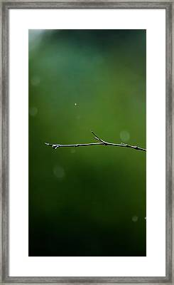 Rain Bokeh Framed Print by Shelby  Young