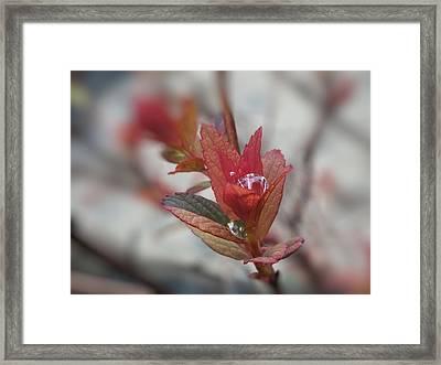 Framed Print featuring the photograph Rain Catcher by Gene Cyr