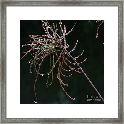 Rain Catchers Framed Print by Joy Hardee
