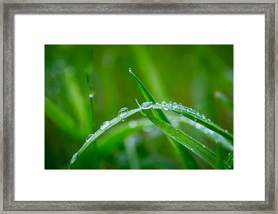 Rain Covered Grass Framed Print