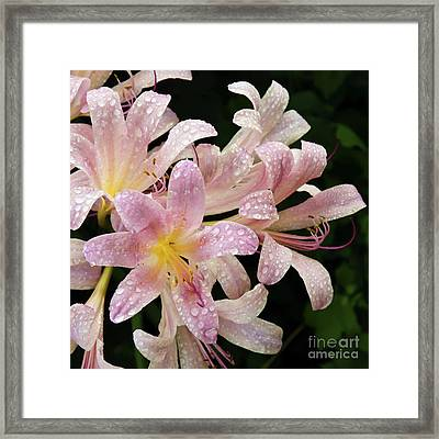 Rain Covered Surprise Lilies Framed Print by Andee Design