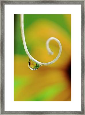Rain Drop With Flower Reflected Framed Print by Jaynes Gallery