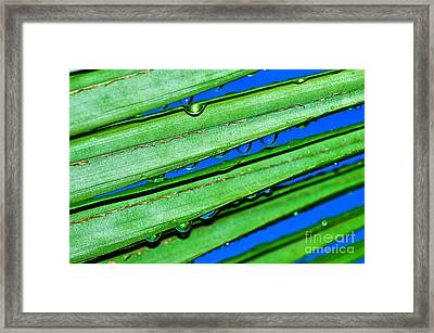 Rain Drops In Blue And Green Framed Print by Kaye Menner