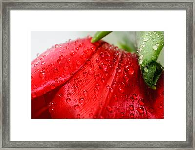 Rain Drops Framed Print by Ivelin Donchev