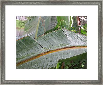 Framed Print featuring the photograph Rain Drops Keep Falling On Me by Jean Marie Maggi