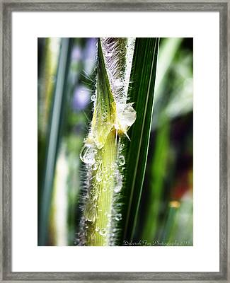 Framed Print featuring the photograph Rain Drops On Blades by Deborah Fay