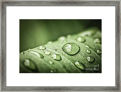 Rain Drops On Green Leaf Framed Print by Elena Elisseeva