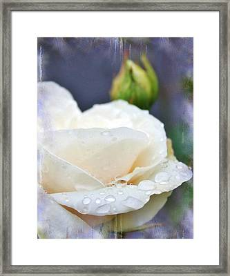 Rain Drops On Roses Framed Print by Cathie Tyler