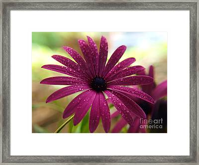 Framed Print featuring the photograph Rain Drops by Trena Mara