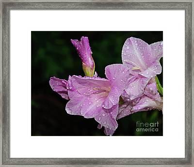 Rain Flower 1 Lavender Framed Print by Andee Design
