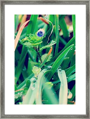 Framed Print featuring the photograph Rain Flower by Candice Trimble