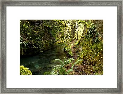 Rain Forest 2 Framed Print by Randy Giesbrecht