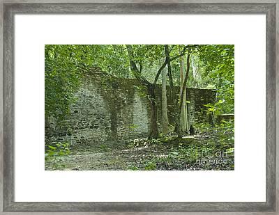Rain Forest Jungle And Ruins At Calakmul Framed Print by Ellen Thane
