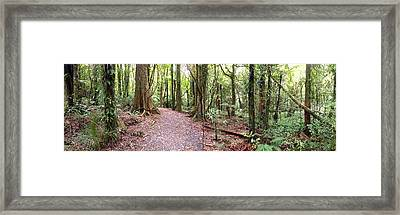 Rain Forest Framed Print by Les Cunliffe