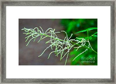 Rain Forest Magic Framed Print by Dana Kern