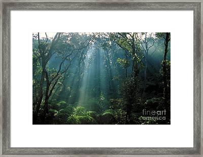 Rain Forest Of Tree Ferns Framed Print