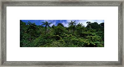 Rain Forest Paparoa National Park S Framed Print