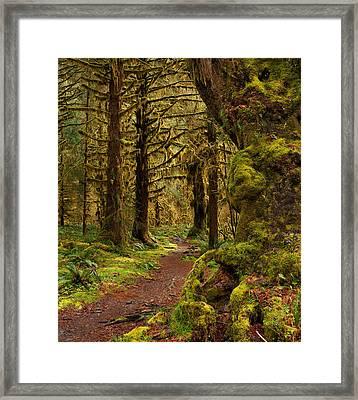 Rain Forest Path Framed Print