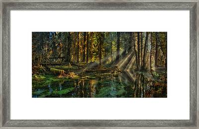 Rain Forest Sunbeams Framed Print by Mary Jo Allen
